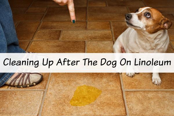 Dog S On The Linoleum