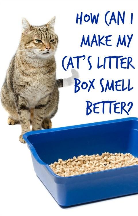 make litter box smell better