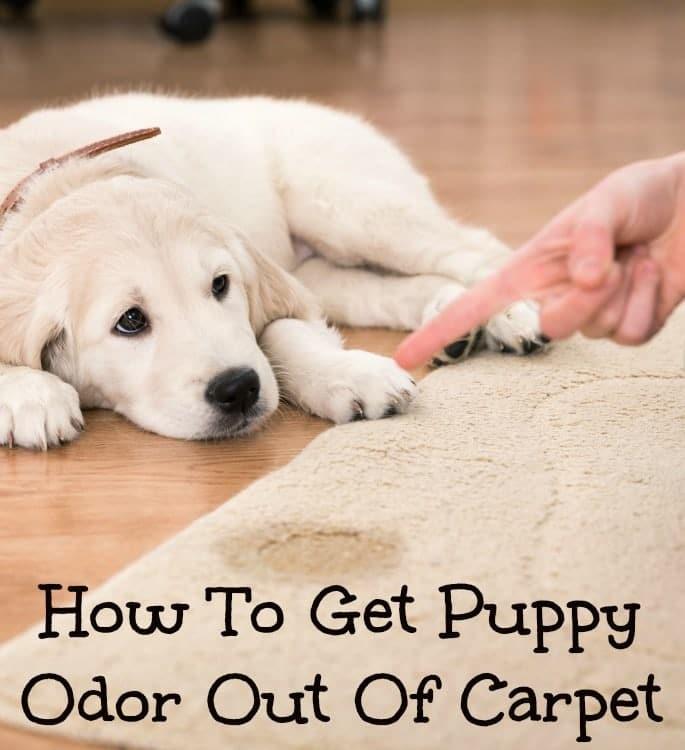 puppy odor in carpet