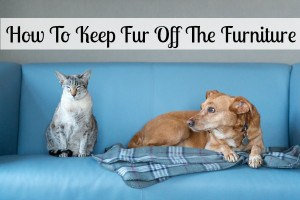keep fur off the furniture