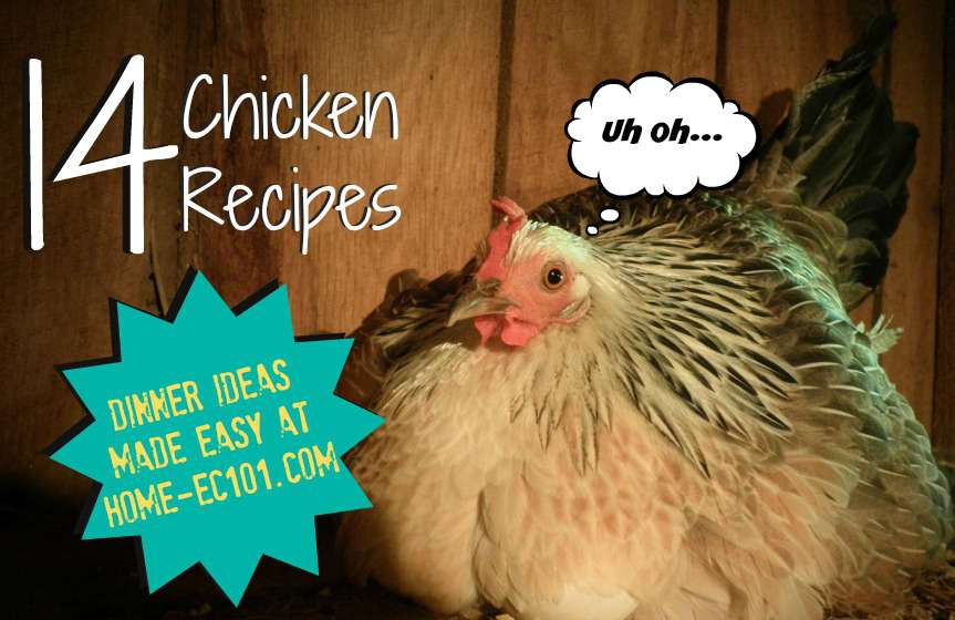 A Guide to Cooking and Using Chicken